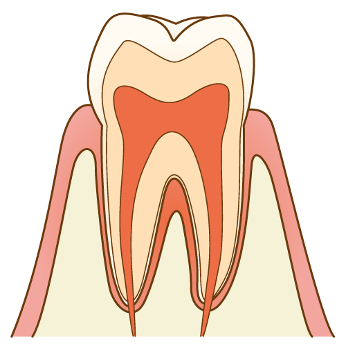 歯根膜とは?