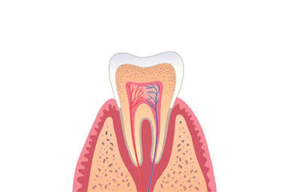 歯周病専門医